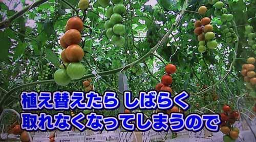 https://img.cc0.cc/hatena/?u=nanigoto/2015/20151104_1500_20.jpg