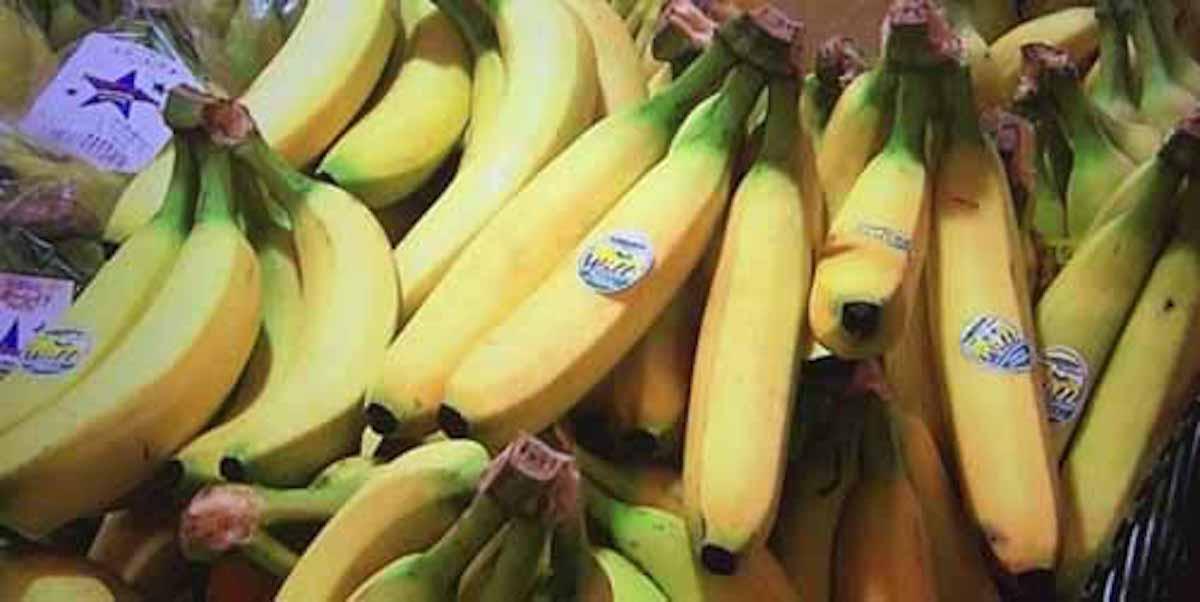 バナナが食べられなくなる!?:ビビット