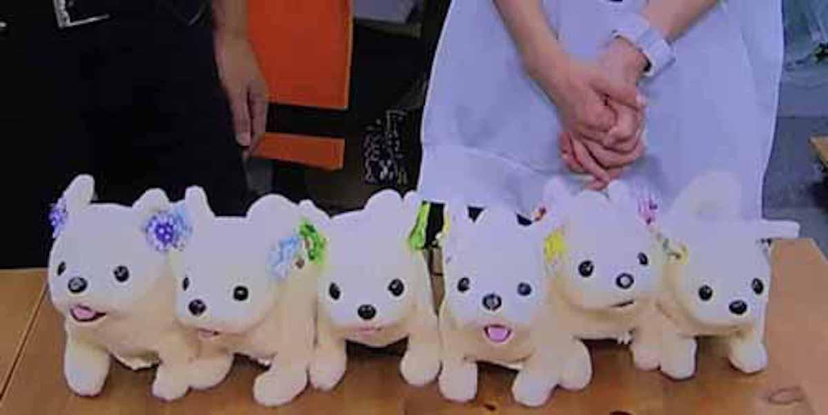 においを判定する犬型ロボット「はなちゃん」:新・情報7daysニュースキャスター【2017/09/09】