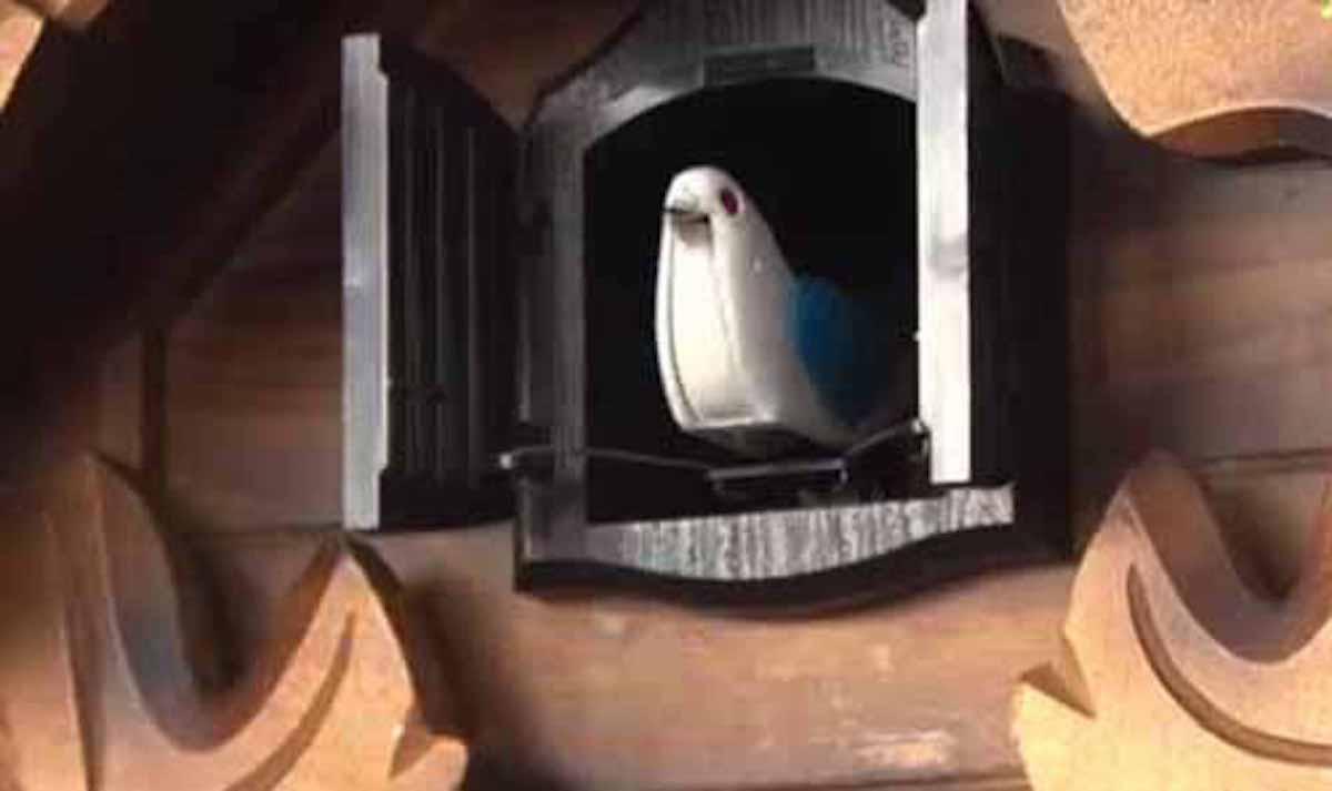 鳩時計の鳥は ハトではないという話:ZIP!【2018/03/06】