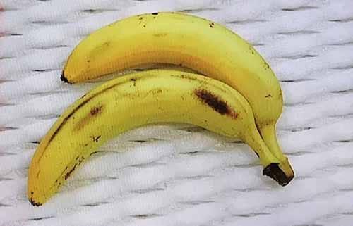 下にあるバナナの方が大きく見える!?ジャストロー錯視の話:ヘウレーカ!【2018/07/04】
