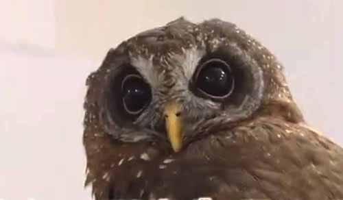 フクロウの首が270度も回る理由:ZIP!【2018/11/29】
