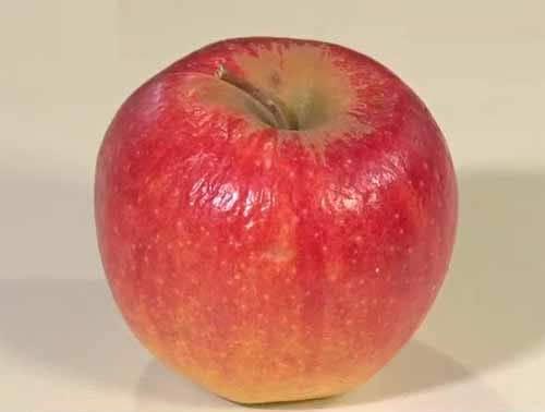 余ったリンゴでジャムを作る方法:ZIP!【2019/03/19】