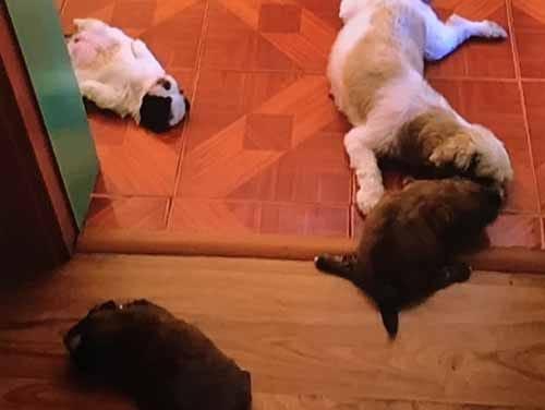 仰向け で 寝る 犬