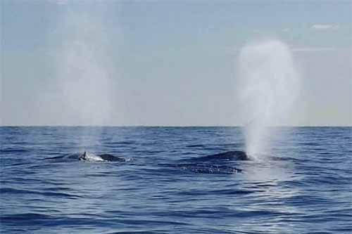 クジラは何のために潮を吹く?という話:そんなコト考えた事なかったクイズ!トリニクって何の肉!?【2019/11/19】