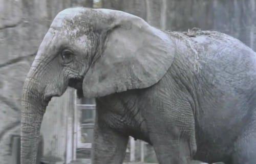 象は耳ではなく足で会話しているという話:新・情報7daysニュースキャスター【2019/11/30】