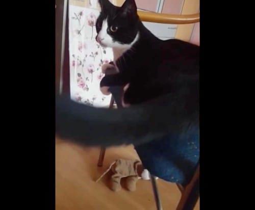 自分の尻尾で顔面を強打する猫の話:モーニングショー【2019/12/12】