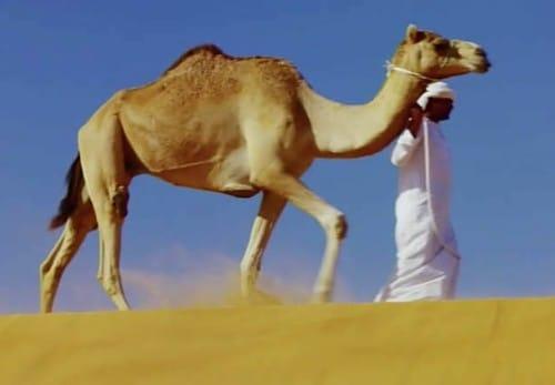 ラクダが砂嵐の中で目を開けていられる理由:そんなコト考えた事なかったクイズ!トリニクって何の肉!?【2020/01/21】