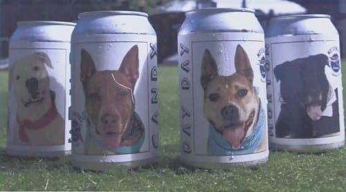 失踪した愛犬が「ビール缶」をキッカケに見つかった!という話: