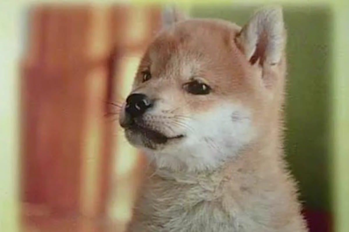 犬の名前といえば「ポチ」なのはなぜ?という話:キャスト【2020/02/10】
