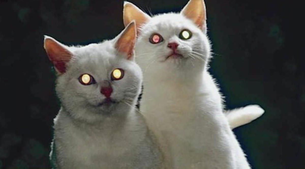 猫の目が夜に光るのは何のため?という話:トリニクって何の肉!?【2020/02/11】