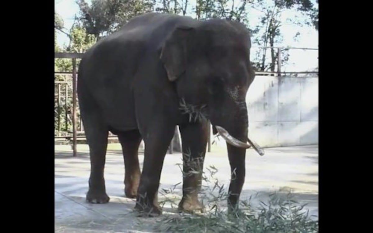 象の歯は何本ある?という話:トリニクって何の肉!?【2020/02/25】