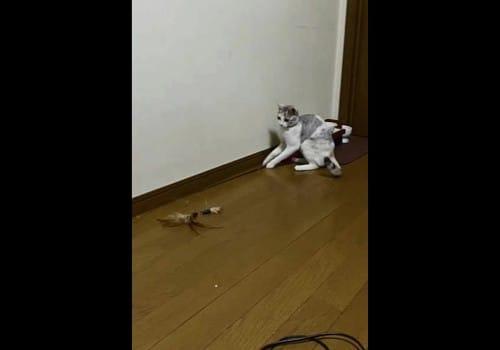 猫が釣りをする!?1人猫じゃらしの話:スッキリ!【2020/03/09】