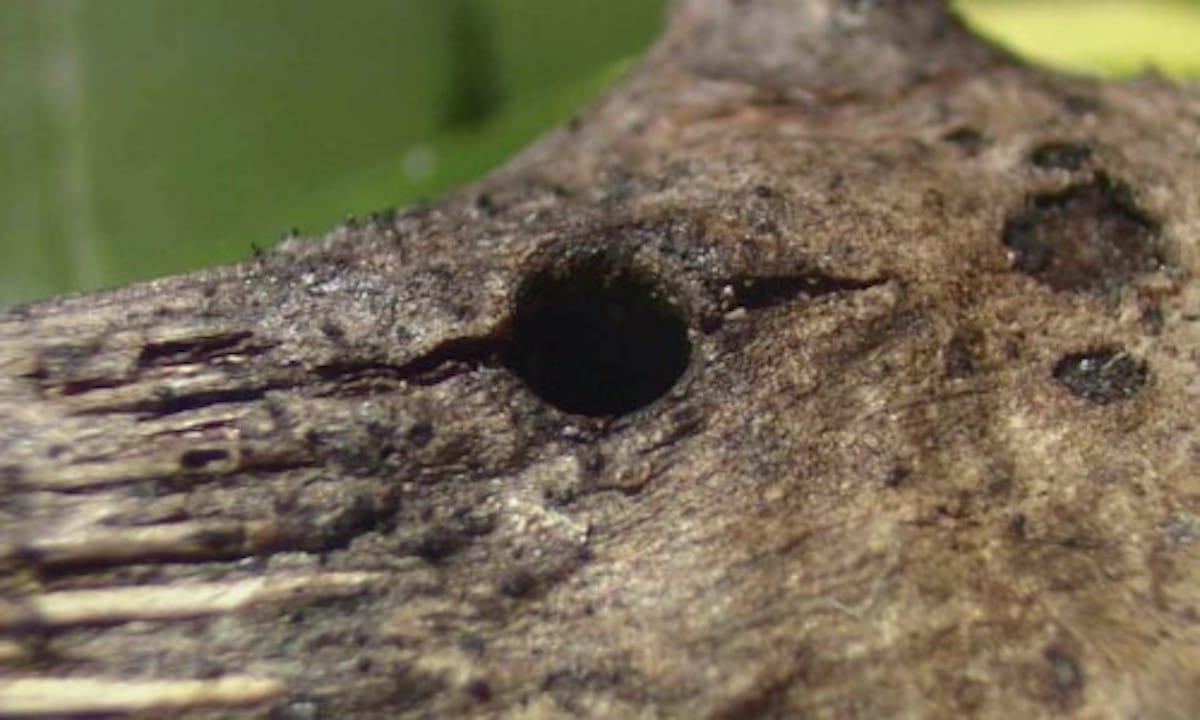 頭で木の穴を塞ぐアリの話:ピタゴラスイッチ【2020/04/25】