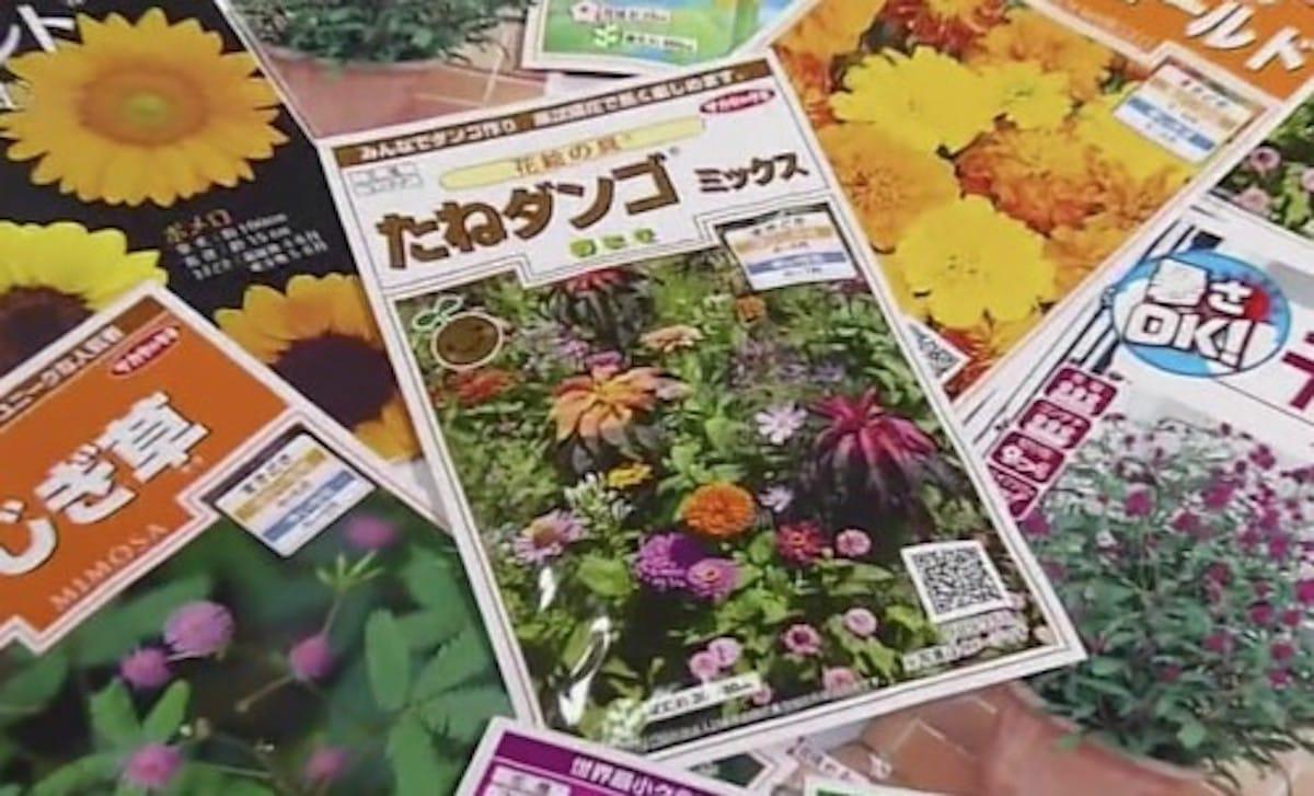 「たねダンゴ」が人気だという話:WBS【2020/04/28】