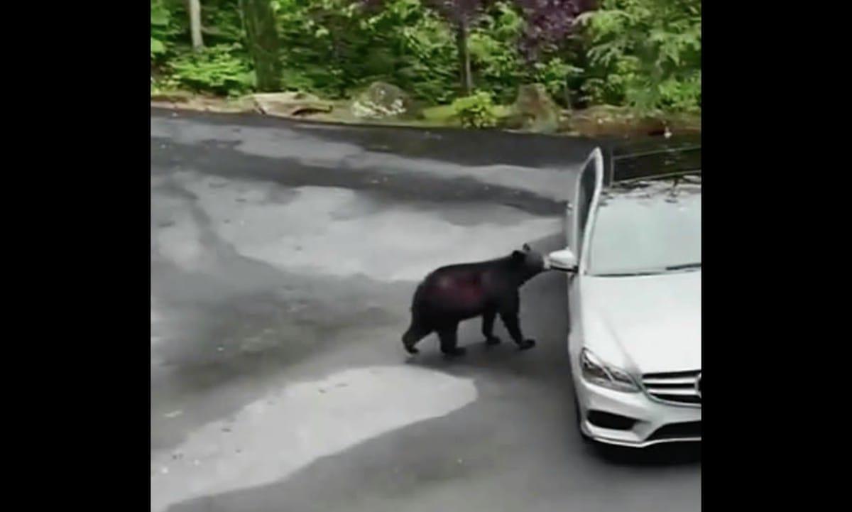 人間みたいな動きをするクマの話:スッキリ!【2020/06/05】