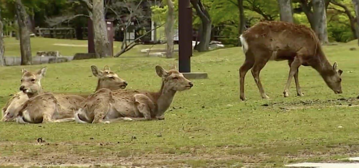 鹿のフンが丸い理由:トリニクって何の肉!?【2020/06/30】